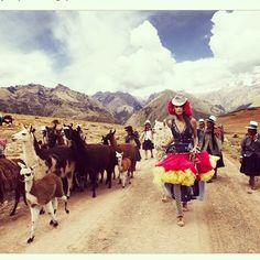 #weekend #strut #mariotestinoperu #alpacas #elhummingbird #nature #fashion #textiles