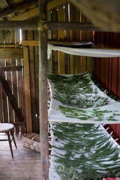I det gamla salvkokeriet som ligger precis i närheten av parets hem finns nu Sofias lager av torkade örter och tinkturer. I den gamla ladan är det perfekt klimat för att torka örter. Det är mörkt och luftigt. Springorna i väggarna gör att fukten blåser bort.