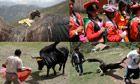 Fight of the condor: Peru bull fiestas threaten future of rare Andean bird  Article