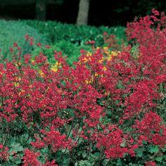 Évelő növények nagy választékban, kedvező áron!
