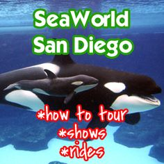 SeaWorld San Diego Review