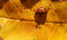 Ladybird^^ by Marko Zivanic on 500px