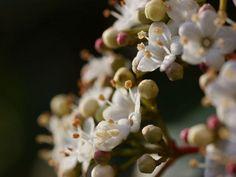 mit fruchtwechsel zu mehr erfolg im gemüsegarten | februar 2013, Garten Ideen