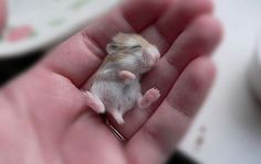 Tiny Adorable Animals That Will Make You Squee - via http://bit.ly/epinner