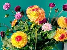 Flowers @moestuin #schotertuin