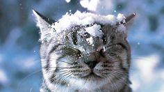 В Чернигове пошел первый снег (ФОТО)