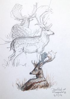 Denmark Sketchbook 2014 | Drawing The Motmot