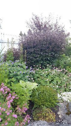 Varierte bladfarger Garden, Pictures, Photos, Garten, Lawn And Garden, Outdoor, Tuin, Resim, Gardens