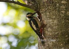 Motive finden - Conrad Amber Animals, Wild Animals, Woodland Forest, Nature, Animales, Animaux, Animal, Animais