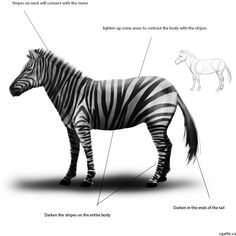 How to draw a zebra step 4: light and shadows can be glazed in with a round brush. Lighten up the back and darken the belly to show where light can reach.