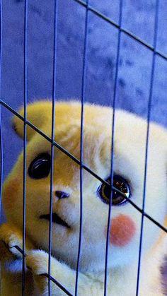 Pikachu Pikachu, Pikachu Mignon, Cute Pokemon Wallpaper, Cute Disney Wallpaper, Cute Cartoon Wallpapers, Cute Love Songs, Cute Love Gif, Pyssla Pokemon, Marshmello Wallpapers