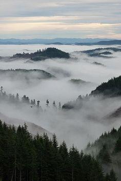 Foggy Oregon Morning | Flickr - Photo Sharing!