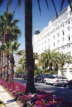 Cannes....did not want to leave! Palm trees are reminding me of south Florida. Would love to visit