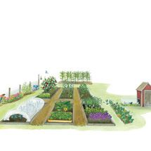 Organic Vegetable Garden Illustration
