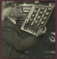 1932 James Cottle Entomologist Butterfly Specimen Photo