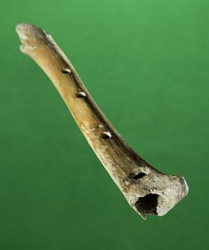 Bone flute (1 of 3 flutes) from the Husøy ship find, ca first half of 14th C AD…
