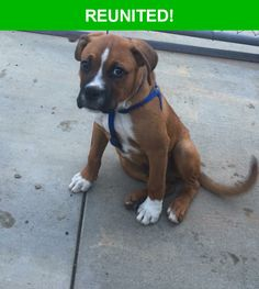 Great news! Happy to report that Rocky Lopez has been reunited and is now home safe and sound! :)