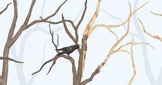 RAVEN IN FOREST - BLUE Raven, Artworks, Bird, Animals, Animales, Animaux, Ravens, Birds, Crows