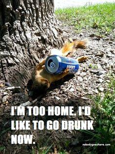 home now drunk squirrel