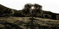 FeleaGoods Cretans' Nutrition: rules of Cretan diet, high quality products, cretan products services