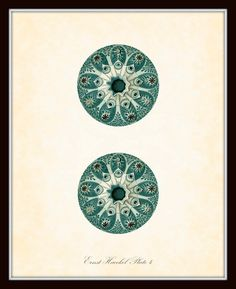 Vintage Ernst Haeckel Sea Urchin Sea Life Series Plate 4 - Natural History Art Print 8 x 10 - Sea Plants - Fantasy Sea Life
