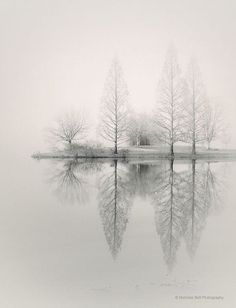 Silence, peaceful, beauty of Nature, water, trees, reflection, solitude, beautiful, photo b/w.