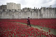 Yeoman Serjeant Bob Loughlin admires an installation made up of hundreds of thousands of ceramic poppies in the moat of the Tower of London. Artist Paul Cummins is putting together the artwork, entitled 'Blood Swept Lands and Seas of Red', to commemorate the First World War http://www.theweek.co.uk/pictures/59779/week-in-pictures-27-july-2-august/page/9/0#ixzz39PW78zrG