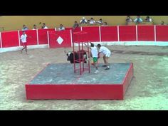 TORO RATON EN RICLA(zaragoza)part.2 - YouTube