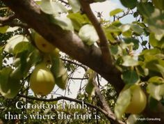Go out on a limb- that is where the fruit is. An illustration from the blog 'moving out of your comfort zone, Part I' #personaldevelopment