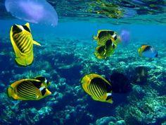 tropical fish make me smile   Hawaii Love