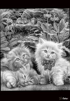 cat kitten coloring colouring adult advanced detailed Een projectjes voor : http://kleurvitality.blogspot.be