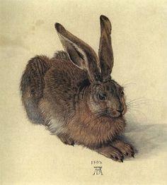 rabbit by Albrecht Durer