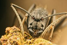 incredible close up macro photography of insect 7