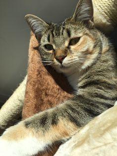 Stripe Cat | Pawshake