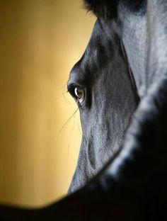 .Black Horse.