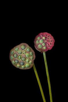 seeds/pods