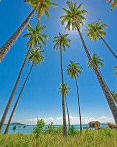 Palms in Semporna - Sabah, Malaysian Borneo. Beautiful World, Beautiful Places, Amazing Places, Philippines, Places Around The World, Around The Worlds, Semporna, Sunny Beach, Borneo