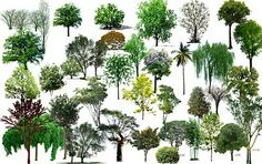Artlantis-library: [Photoshop] Trees PSD on transparent layers