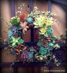   Chicweed: Container Gardens, Landscape Design, Mosaic pots, classes