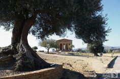 Vallei dei Temple Agrigento A Unesco world heritage site Heritage Site, Cool Places To Visit, Trekking, Europe, World, City, Travel, Viajes, Cities