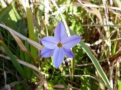 Flower (Pale Purple)