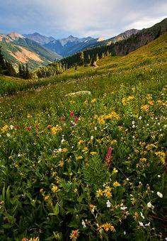51 best colorado flowers images on pinterest rocky mountains san juanred mountain passcolorado usa mightylinksfo