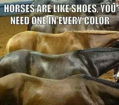 I wish I could have one in every color :/ I only have one horse but hes the - Horses Funny - Funny Horse Meme - - I wish I could have one in every color :/ I only have one horse but hes the Horses Funny Funny Horse Meme Pretty Horses, Horse Love, Beautiful Horses, Horse Girl, Funny Horse Memes, Funny Horses, Funny Humor, Horse Humor, Funny Equine