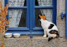 Kitty in the Window.....Every home must have at least one to compliment the house...Cindy