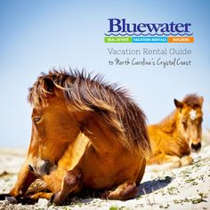 BluewaterNC.com |   Find paradise on North Carolina's favorite family beaches! Over 800 vacation rentals - pet friendly and layaway available!