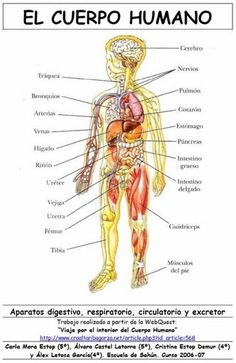cuerpo_humano.jpg (332×512)