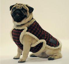 Como Hacer Ropa Para Perros Caseros | Educa a tu Perro Con Brandom