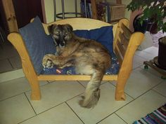 It's a dog's life!  The life each of our strays should be enjoying like Allegra here