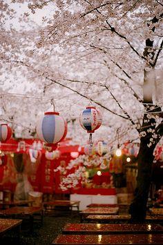 sakura and lanterns during hanami in Japan 日本 Kyoto, Sakura Cherry Blossom, Cherry Blossoms, Blossom Trees, Japan Spring, Japon Illustration, Travel Box, Japanese Culture, Historical Sites