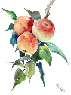 Buy Apples on the Tree, Watercolor by Suren Nersisyan on Artfinder. Discover thousands of other original paintings, prints, sculptures and photography from independent artists.